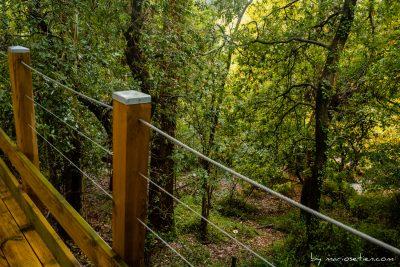Vista al bosque desde la terraza