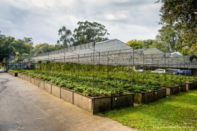 Plantaciones en la Huerta de Cubas